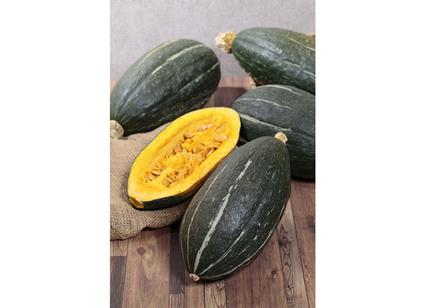 サカタのタネ、ラグビーボール型のカボチャ「スイートタックル」の種子を通信販売と直営店限定で発売