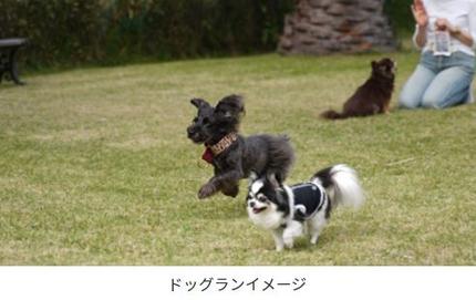 観音崎京急ホテル、敷地内に全面天然芝の「シーサイドドッグラン観音崎」をオープン